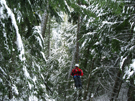 Ziptrek Zipline, Whistler, BC